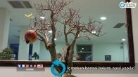İç mekan bonsai bakımı nasıl yapılır?