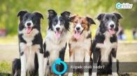 Köpek oteli nedir?
