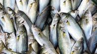 Doya doya balık yediniz mi?