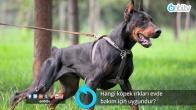Hangi köpek ırkları evde bakım için uygundur?