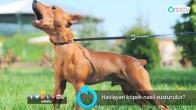 Havlayan köpek nasıl susturulur?