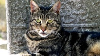 İstanbul'u Anlatan 10 Kedi Fotoğrafı