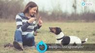 Köpek eğitimi nasıl yapılır?