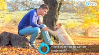 Köpek eğitimine ne zaman başlanmalı?
