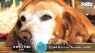 Köpek huzur evinin amacı nedir?