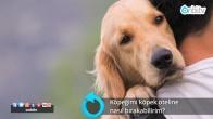 Köpeğimi köpek oteline nasıl bırakabilirim?
