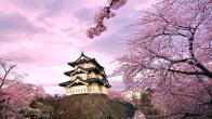 Sakura ve Samuray İlişkisi