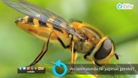 Arı sokmasında ne yapmak gerekir?