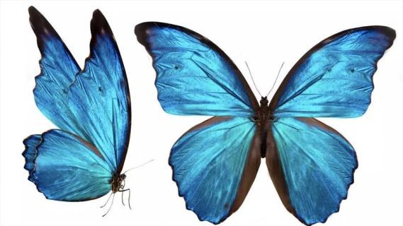 Kelebeğin Rüyası